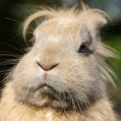 Kaninchen überwintern