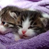 Zeckenmittel bei Katzen