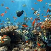 Fadenalge im Aquarium entfernen